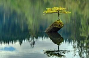 Tree Survive